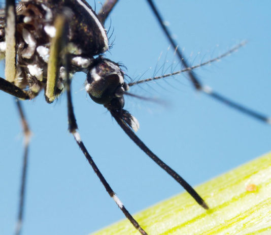 threats of Zika virus