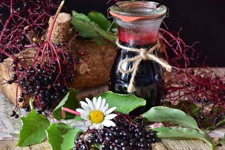 Elderberry for Cold
