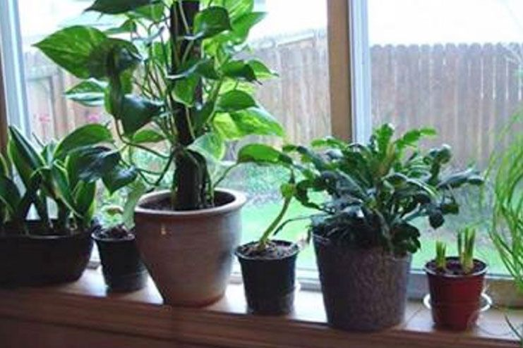 2place Air Purifying Plants Inside Your House