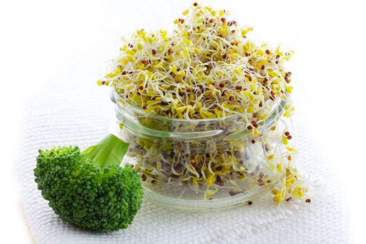 Broccoli And Broccoli Sprouts
