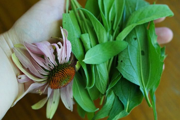 Sage and Echinacea for Sore Throat