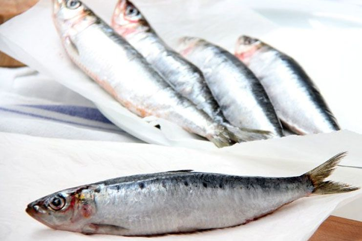 Fish such as sardines and pilchards