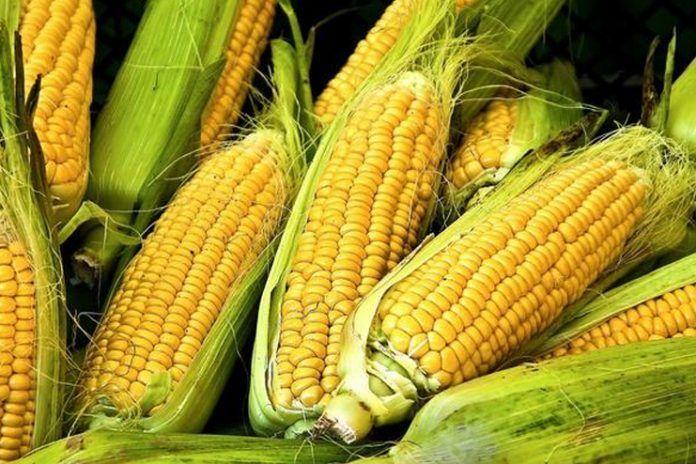 Eat corn