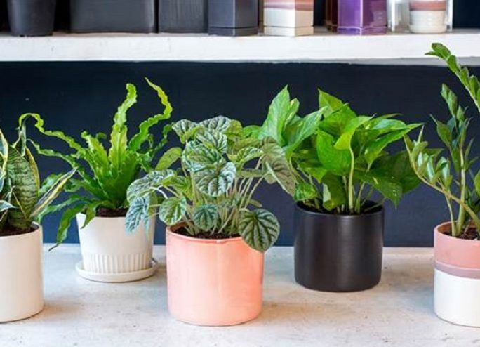 plants for your bedroom to cure insomnia