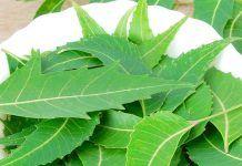 side effects of neem