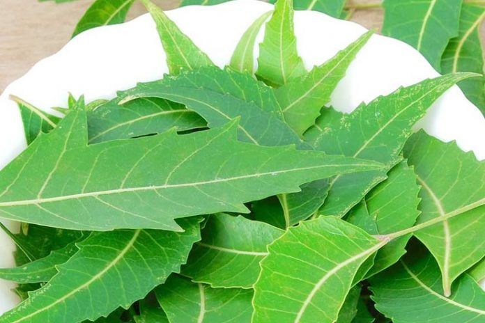 side effects of neem