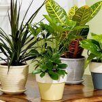 plants to improve indoor air