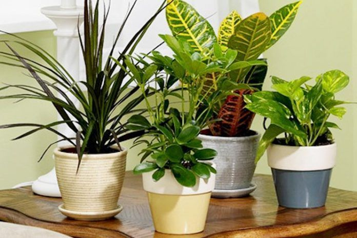 plants to improve indoor air