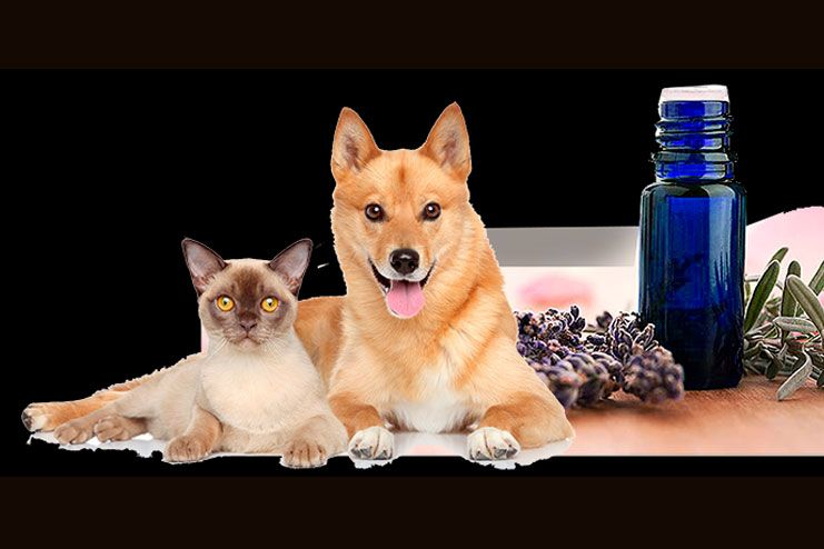 Best essential oils for fleas on pets