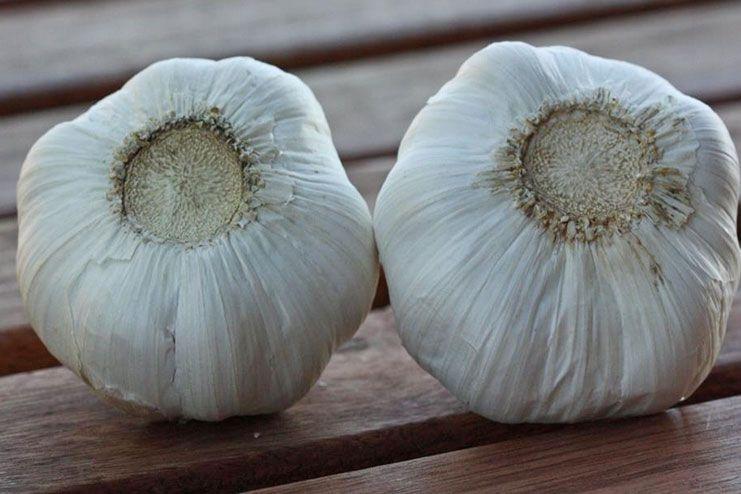 Garlic comes from China