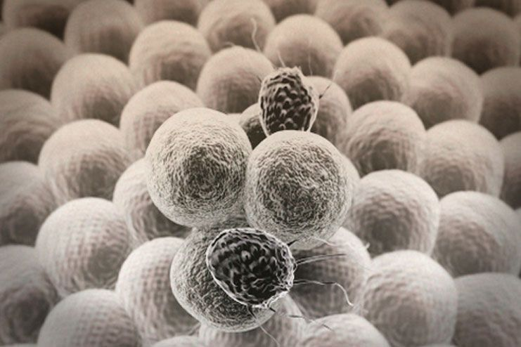 symptoms of low lymphocytes count