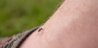 Mosquito-Bites01