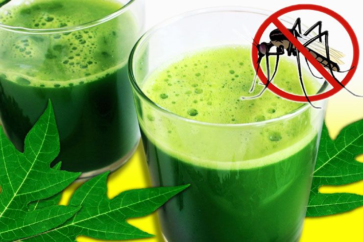 Papaya leaf Juice For Dengue Fever