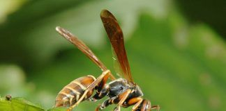 Get Rid Of Wasps