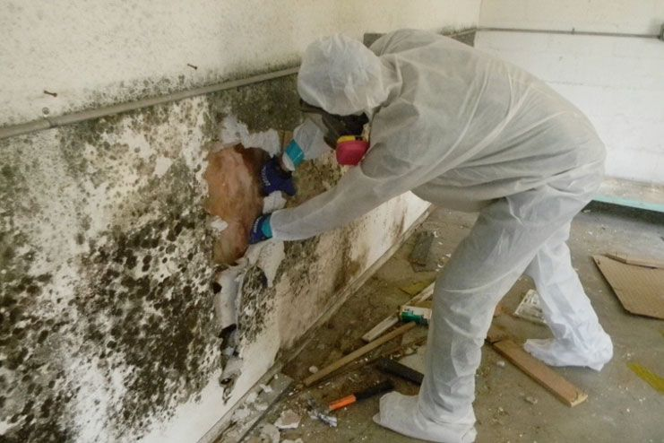 Kill black mold with ammonia