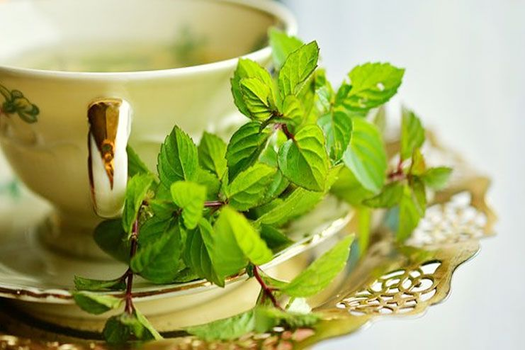 Green tea helps you live longer