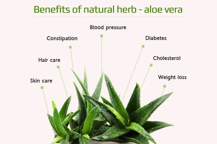 What are the benefits of Aloe Vera