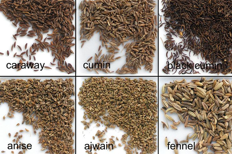 Fennel seeds, caraway and anise for stomach bloating