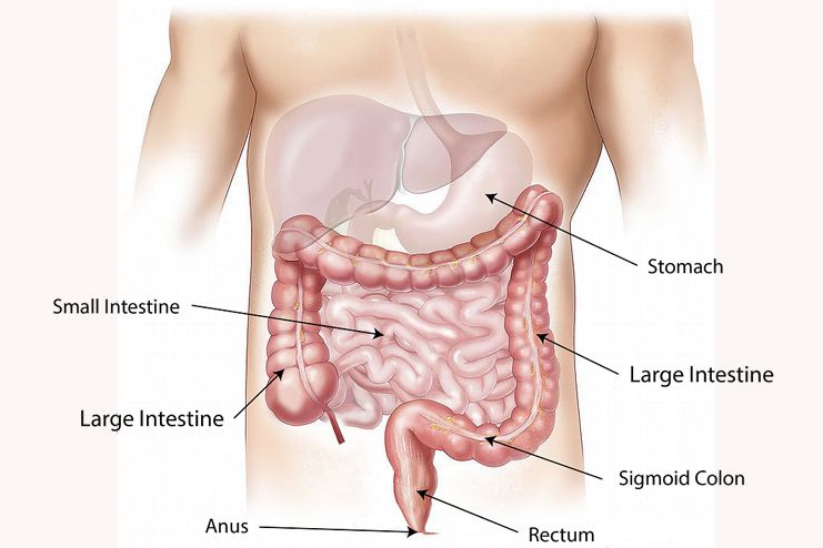 Bloating and Digestion
