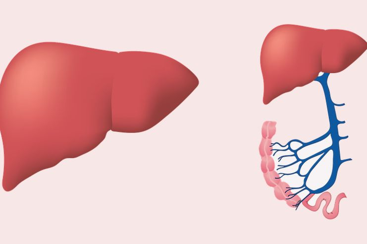 Strengthen Liver functions
