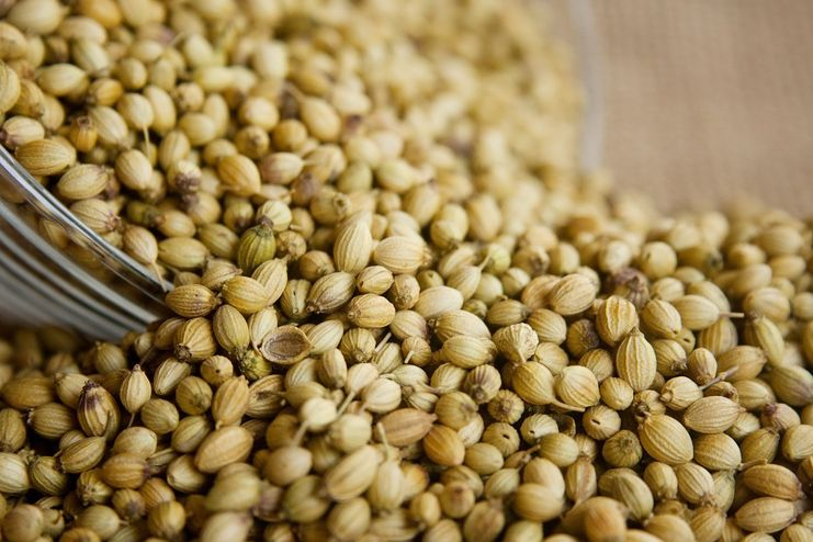 Coriander for morning sickness