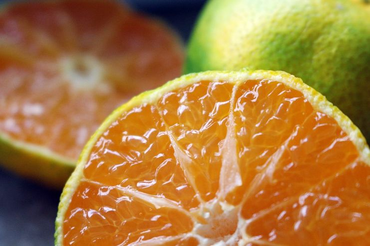 Citrus Limetta Fruit for Malaria Treatment