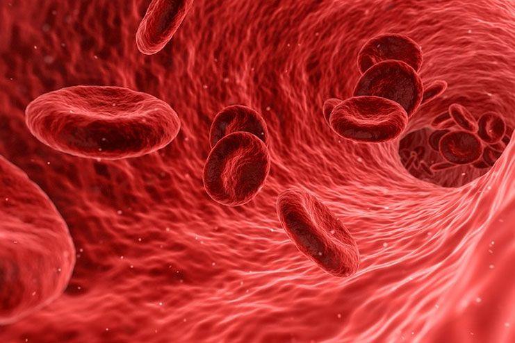 Hot Water Boosts Blood Circulation