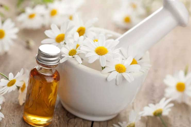 Roman Chamomile Essential Oil for Sleep