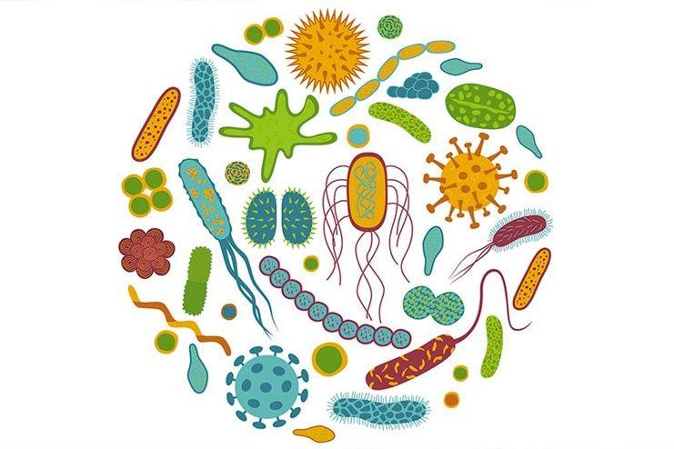 Try Probiotics to get rid of flatulence
