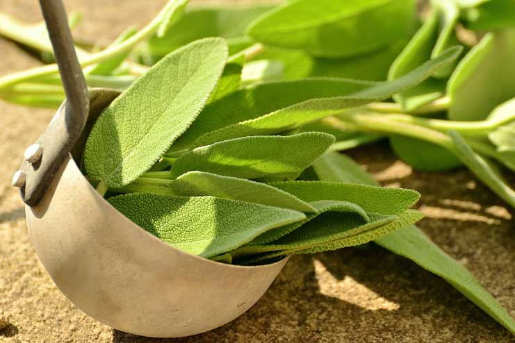 Sage to Stop Snoring Naturally