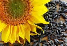 Benefits of Sunflower Seeds