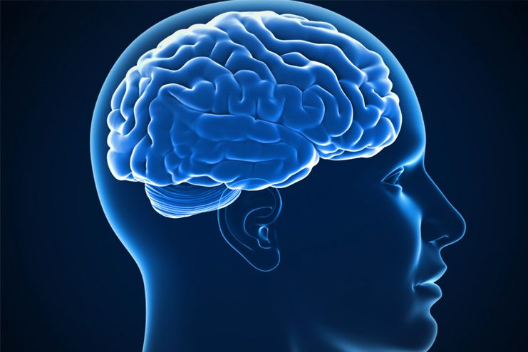 Sweating is beneficial for the brain