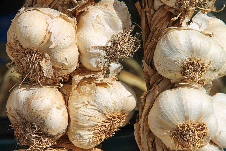Garlic for Platelet Count
