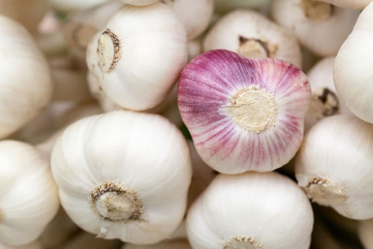 Garlic for Staph Infection