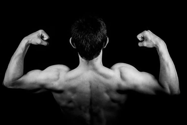 Muscle building and muscle repair