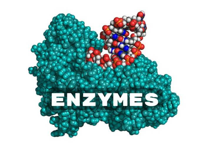 Part of enzymes