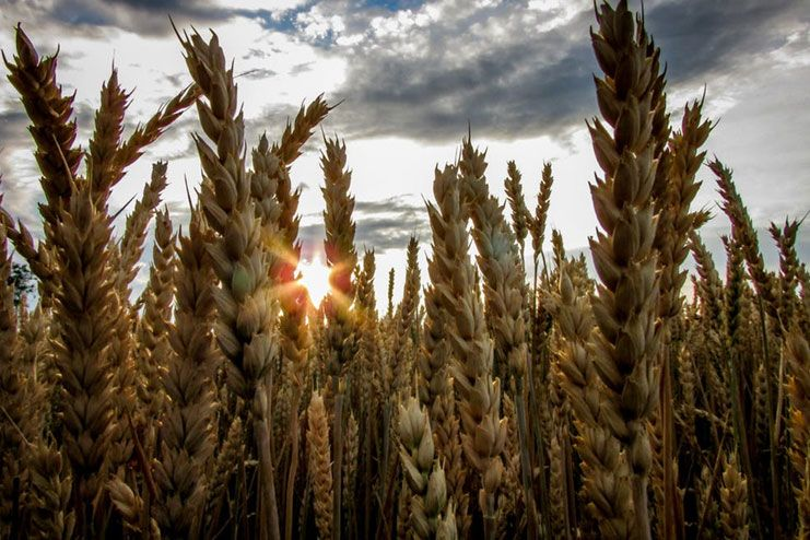 Stick to whole grains