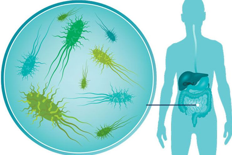 What Are The Benefits Of Gut Bacteria