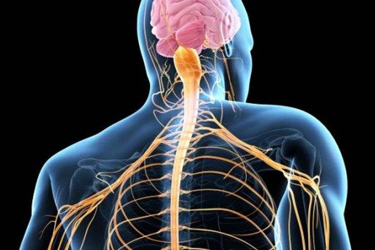 How does it affect the Nervous System