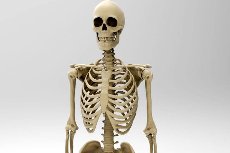 How does it affect your skeletal