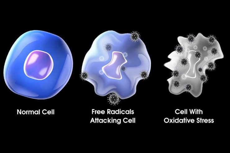 What are free radicals in the body