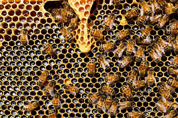 Organic and local honey