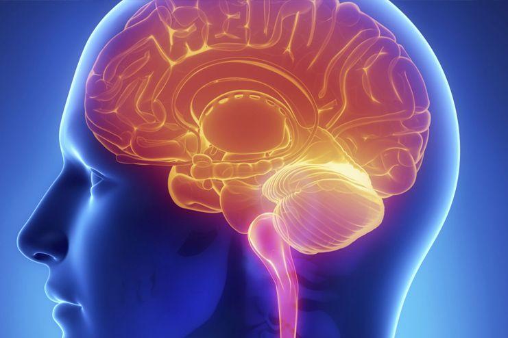 Promotes better brain function