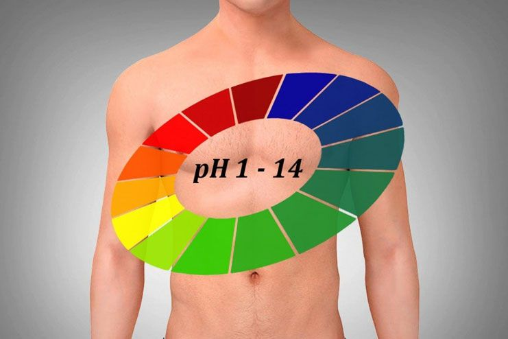 Maintains the pH