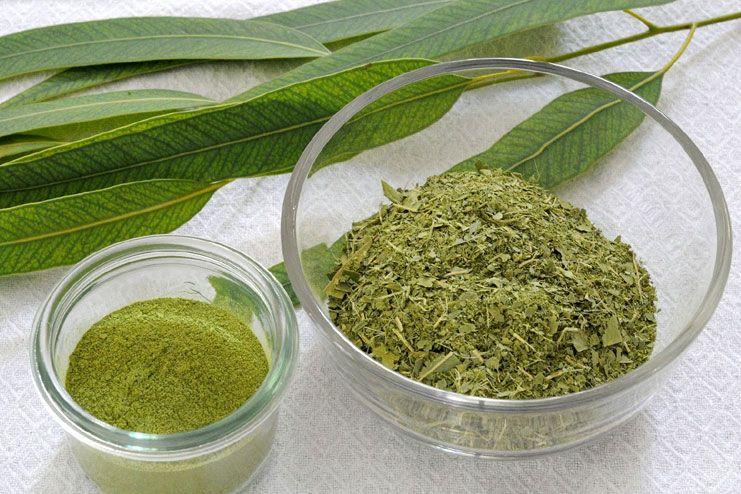 Laryngitis - Eucalyptus tea