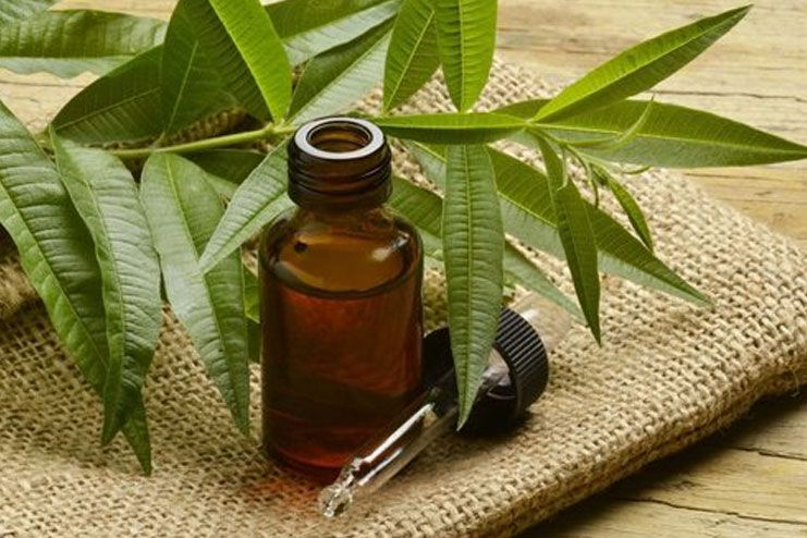 Reducing Body Odor - Tea tree oil