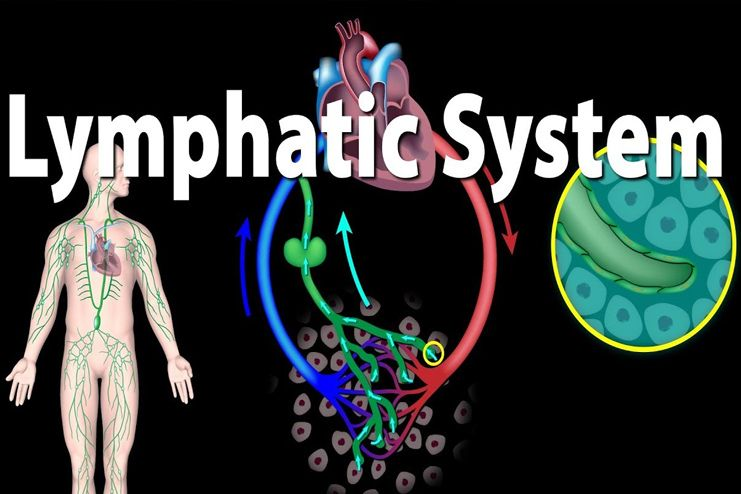 Better drainage of the lymphatic system