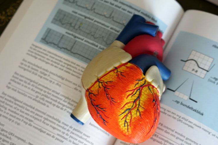 Impacts on the cardiovascular health