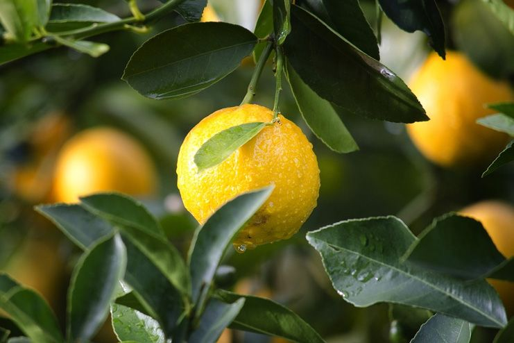 Lemon for Underarm Odour
