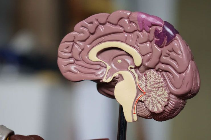 Better impacts on the brain function